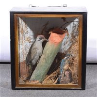 Lot 82-Taxidermy: Green Woodpecker, and a Kingfisher, glazed case, 43x41cm.