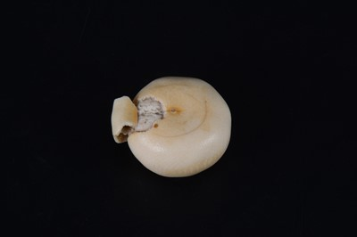 Lot 38-A Japanese carved and stained ivory model of a part-peeled satsuma, early 20th Century